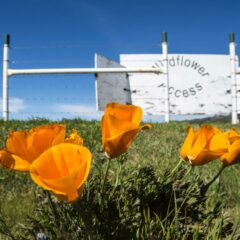 Six Things to do in the Spring in the Valley