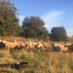 Strength in Numbers: The California Wool Growers Association