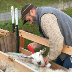 Measuring Coexistence: the Livestock Guardian Dog GPS Project