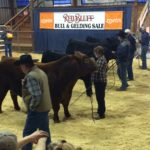 The Art of Auctioning in Red Bluff