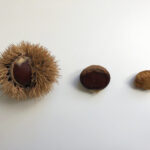 Chestnuts roasting on an Open Fire… What You didn't know!