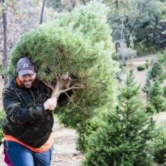 Up the Hill to a Christmas Tree Farm