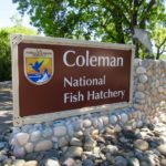 Exploring the Coleman Fish Hatchery