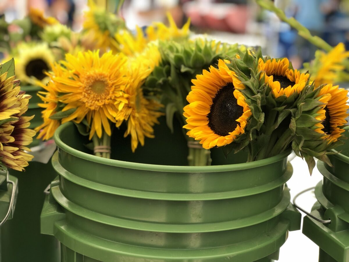 bucket of sunflowers at farmers market