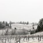 Shhh… The Vines are Sleeping
