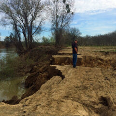 Feather River erosion