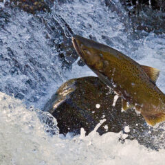 Four ways fish are getting a fighting chance