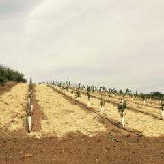 Switching from drought to flood preparation