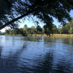 The Sacramento River – An International Fly Fishing Destination. Who knew?