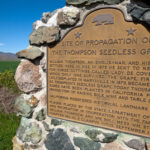 Valley History from Afar: Grapes and Victorians