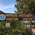 Exploring the Nimbus Fish Hatchery