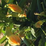 How does your garden grow in this drought?