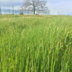 Protecting Water Quality before the crop starts growing