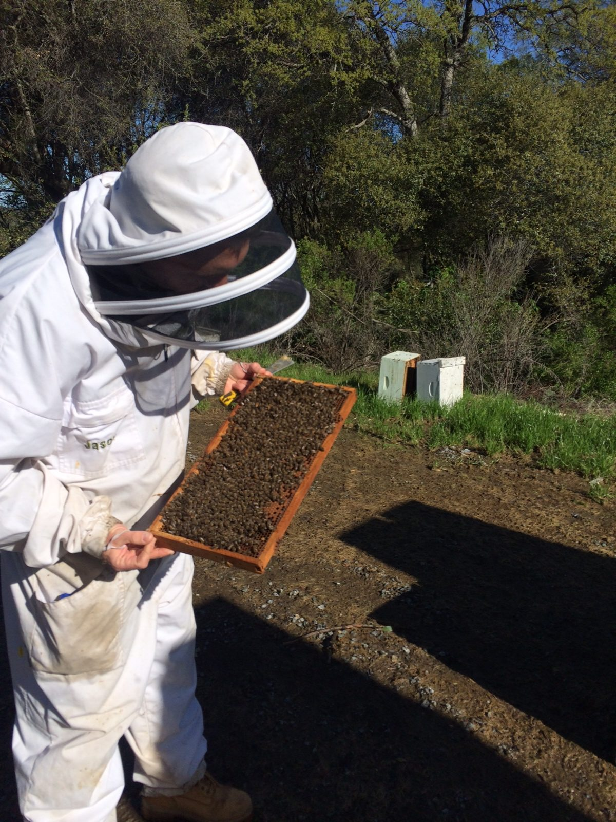 Beekeeping Benefits