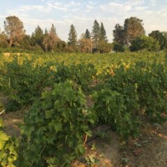Harvest is on the horizon but water still on our minds