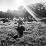 The Rites of Spring (Lambing)