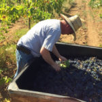 5 weird things I do during grape harvest
