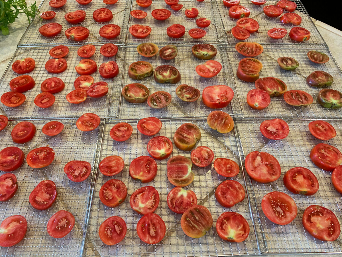 sliced tomatoes on drying rack