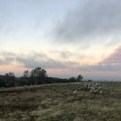 Of Rain and Grass and Waiting for Lambs