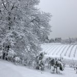 Vineyard Snow