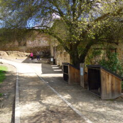 Knights Ferry: Perfect Picnicking in a Historic Venue