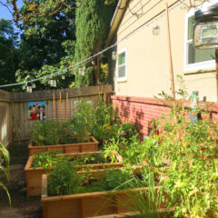 A Season in Our Gardens – Hit of the Summer!