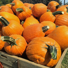 5 unexpected reasons to hit this prolific pumpkin patch