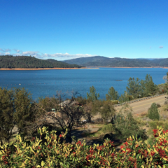 Oroville Lake Levels