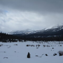 Skiing or Snowshoeing the Old Luther Pass Road: A Fantastic Winter Outing