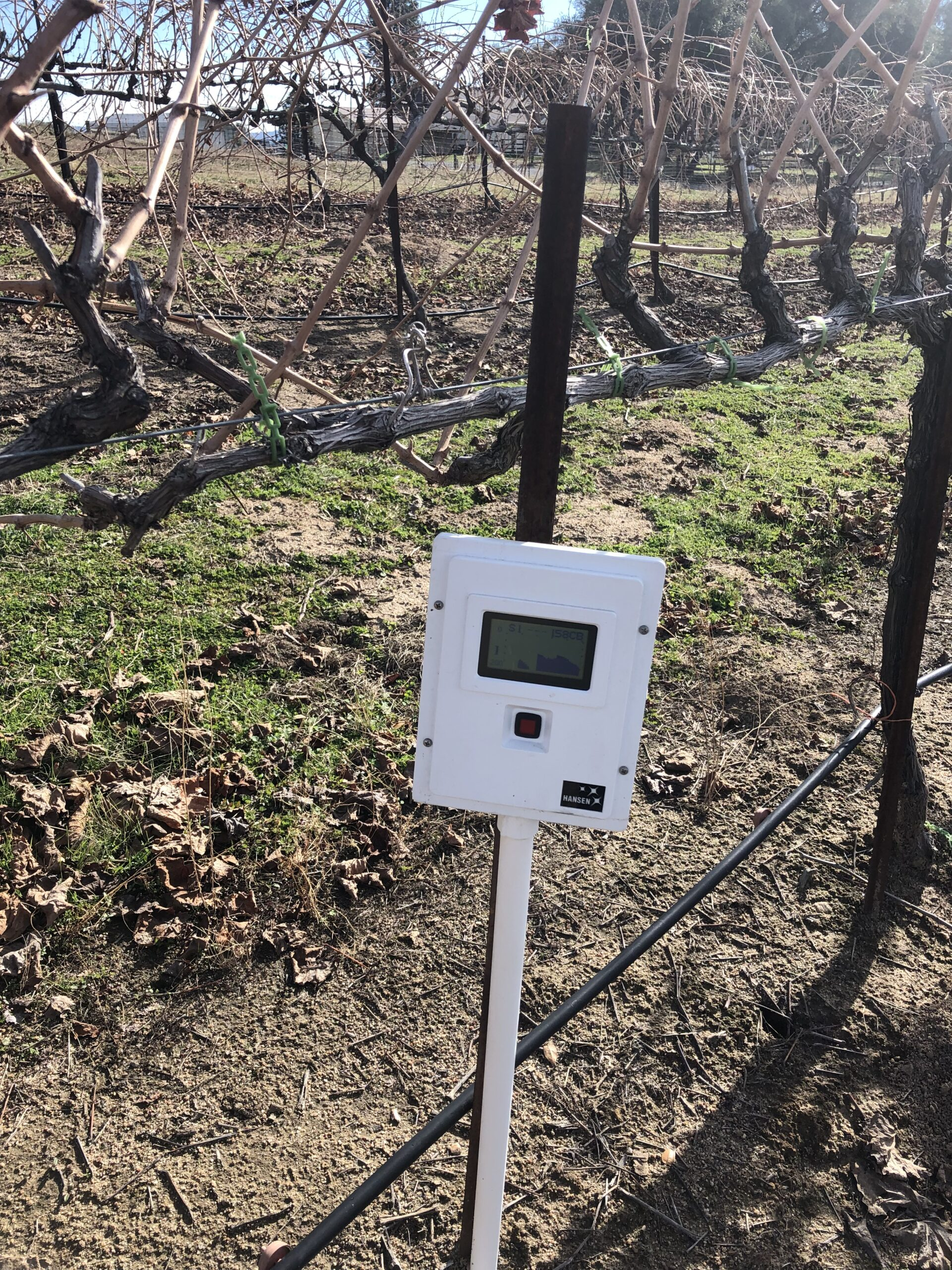 grape vine with moisture sensor