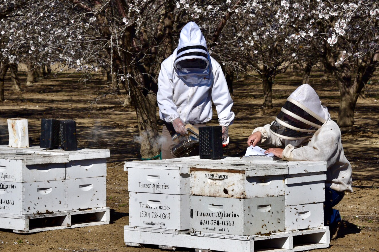 beekeepers in suits removing bees from their boxes