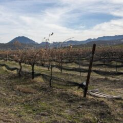 The Sutter Buttes Means Wine