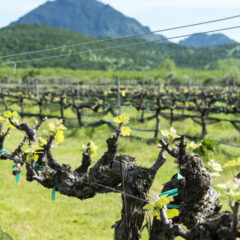 Wineries of the Sutter Buttes